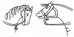 http://www.thehorses.ru/text/img_text/dospeh/1.jpg