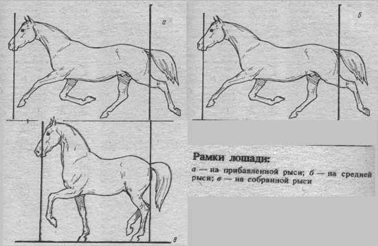 Рамки лошади